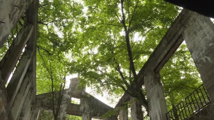 Bâtiment en ruine sans toit avec des arbres qui poussent par les fenêtres.