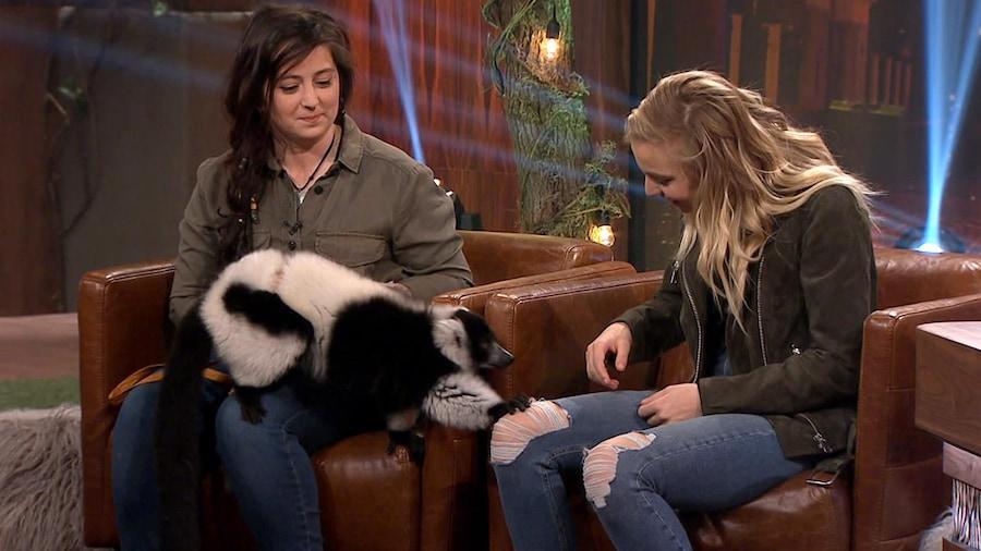 Un lémur vari noir et blanc essaie de monter sur le genou de Ludivine Reding.