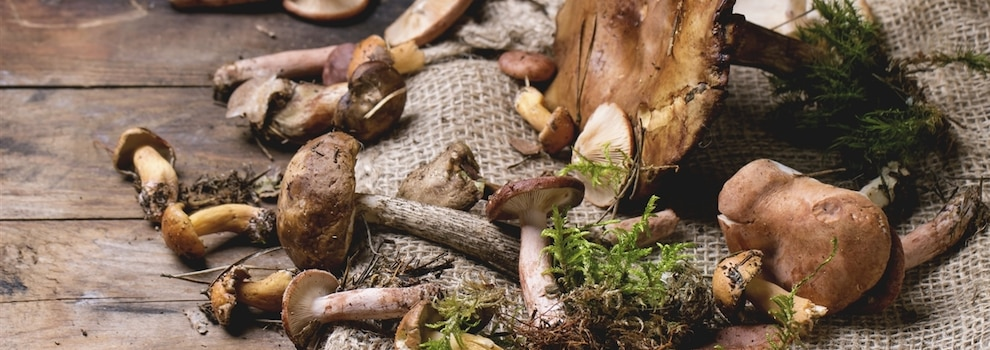 Les champignons: fascinants, surprenants et délicieux